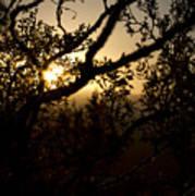 Peeking Sun Poster