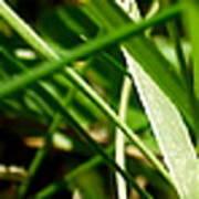 Pei Grass - Bottom Poster