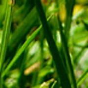 Pei Grass - Top Poster