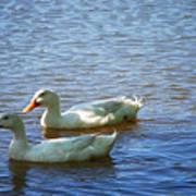 Pekin Ducks 20120515_15 Poster