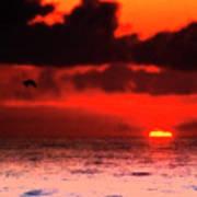Pelican At Sunrise Poster
