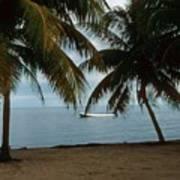 Pelican Beach Belize Poster