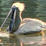 Pelican Dinner Poster
