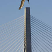 Pelican Diving Arthur Ravenel Jr Bridge Over The Cooper River In Charleston South Carolina Poster