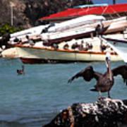 Pelican Drying Wings Poster
