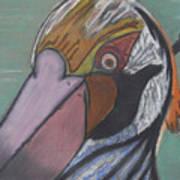 Pelican Face Poster