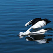 Pelican Fishing 666 Poster