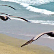 Pelican Fly-by Poster