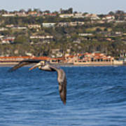 Pelican Flying Above The Pacific Ocean Poster
