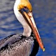 Pelican Head Shot Poster