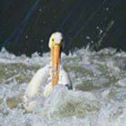 Pelican In Rough Water Poster