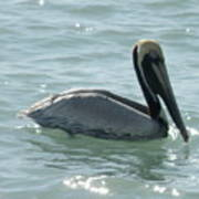 Pelican In The Sparkling Water Poster
