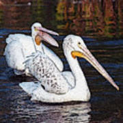 Pelican Love Poster