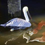 Pelican Swim II Poster