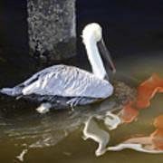 Pelican Swim Poster