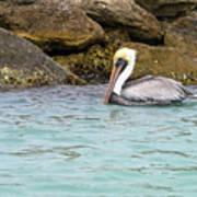 Pelican Trolling Poster