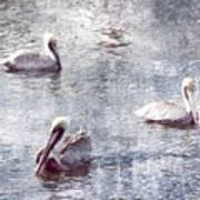 Pelicans At Rest Poster