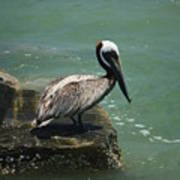 Pelican's Perch Poster