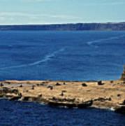 Peninsula De Valdez Poster