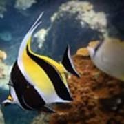 Pennant Coralfish Poster