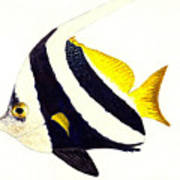 Pennant Fish Poster