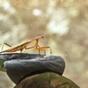 Pensive Mantis Poster