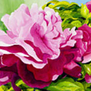 Peonies In Pink Poster