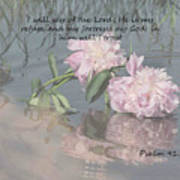 Peonies With Psalm 91.2 Poster