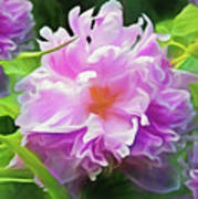 Peony Cluster 7 Poster