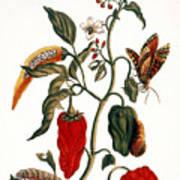 Pepper Plant Poster