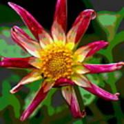 Peppermint Sunburst 2 Poster