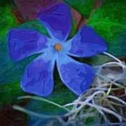 Periwinkle Blue Poster