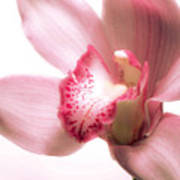 Perky Orchid Poster