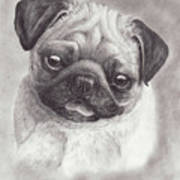 Perky Pug Poster