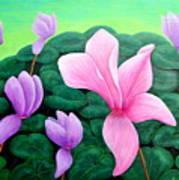Persian Violet Cyclamen Poster