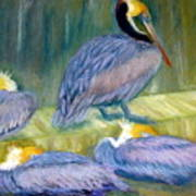 Peruvian Pelicans Two Pastel Poster
