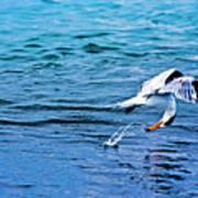 Pescando Vida Poster