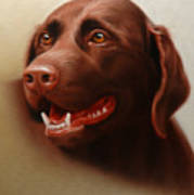 Pet Portrait Of A Chocolate Labrador Poster