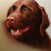 Pet Portrait of a Chocolate Labrador Poster