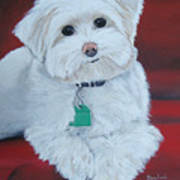 Pet Portrait Painting Commission Maltese Dog  Poster
