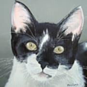 Pet Portrait Painting Commission Tuxedo Cat  Poster
