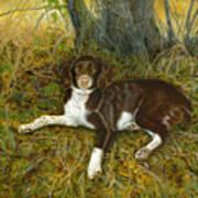 Pet Portrait - Springer Spaniel, Milly Poster