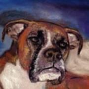 Pet Portraits Poster
