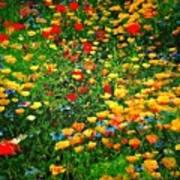 Poppy Petal Patch Poster