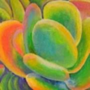 petales Multicolores Poster