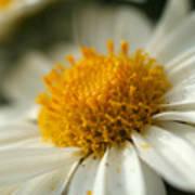 Petals And Pollen Poster