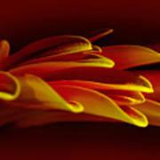 Petals Like Fingertips By Kaye Menner Poster