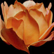 Petals Of Orange Sorbet Poster by DigiArt Diaries by Vicky B Fuller