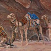Petra Camels Poster