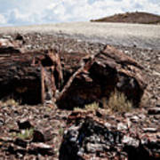 Petrified Wood #2 Poster